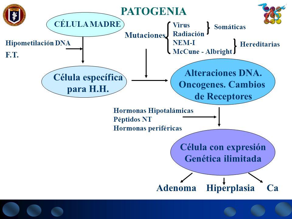PATOGENIA CÉLULA MADRE Célula específica para H.H. Hipometilación DNA Alteraciones DNA. Oncogenes. Cambios de Receptores Célula con expresión Genética