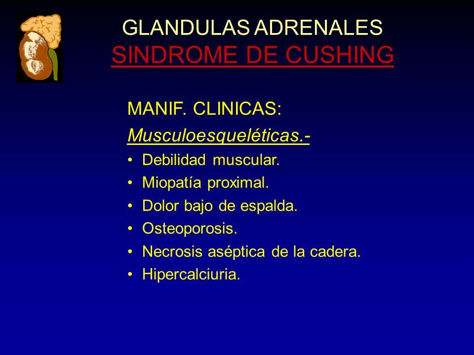 GLANDULAS ADRENALES SINDROME DE CUSHING MANIF. CLINICAS: Musculoesqueléticas.- Debilidad muscular.