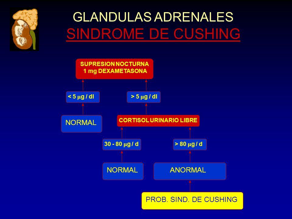 GLANDULAS ADRENALES SINDROME DE CUSHING SUPRESION NOCTURNA 1 mg DEXAMETASONA < 5 g / dl> 5 g / dl NORMAL CORTISOL URINARIO LIBRE 30 - 80 g / d> 80 g / d NORMALANORMAL PROB.