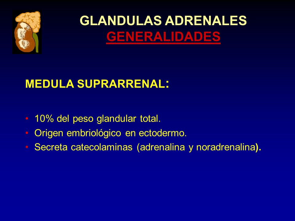 GLANDULAS ADRENALES GENERALIDADES MEDULA SUPRARRENAL : 10% del peso glandular total.