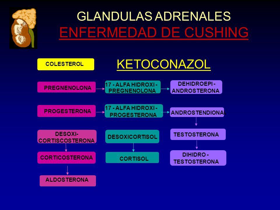 PREGNENOLONA DESOXI- CORTISCOSTERONA GLANDULAS ADRENALES ENFERMEDAD DE CUSHING ANDROSTENDIONA KETOCONAZOL ANDROSTENDIONA CORTICOSTERONA ALDOSTERONA DESOXICORTISOL CORTISOL TESTOSTERONA DIHIDRO - TESTOSTERONA PREGNENOLONA PROGESTERONA 17 - ALFA HIDROXI - PROGESTERONA DEHIDROEPI - ANDROSTERONA COLESTEROL