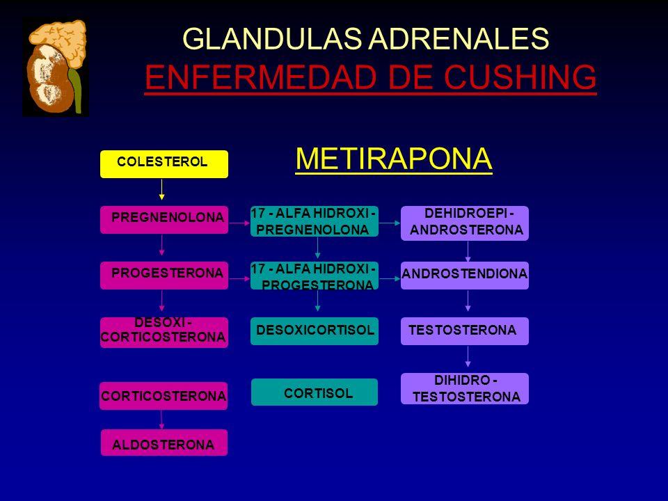 CORTICOSTERONA GLANDULAS ADRENALES ENFERMEDAD DE CUSHING ANDROSTENDIONA CORTICOSTERONA ALDOSTERONA DESOXICORTISOL CORTISOL TESTOSTERONA DIHIDRO - TESTOSTERONA PREGNENOLONA PROGESTERONA PREGNENOLONA 17 - ALFA HIDROXI - PROGESTERONA DESOXI - DEHIDROEPI - ANDROSTERONA COLESTEROL METIRAPONA
