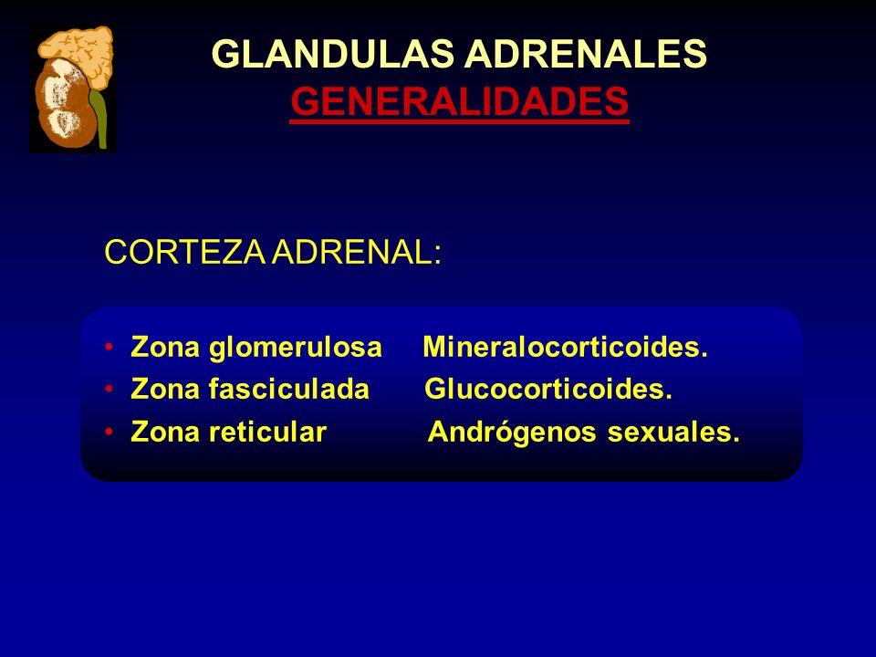 GLANDULAS ADRENALES GENERALIDADES CORTEZA ADRENAL: Zona glomerulosa Mineralocorticoides.