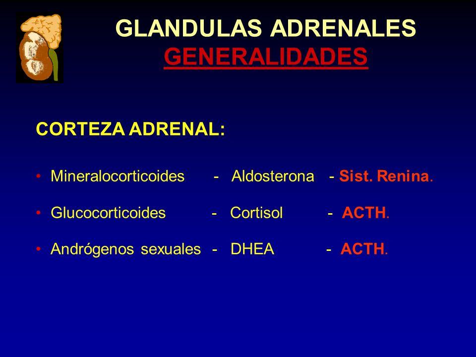 GLANDULAS ADRENALES GENERALIDADES CORTEZA ADRENAL: Mineralocorticoides - Aldosterona - Sist.