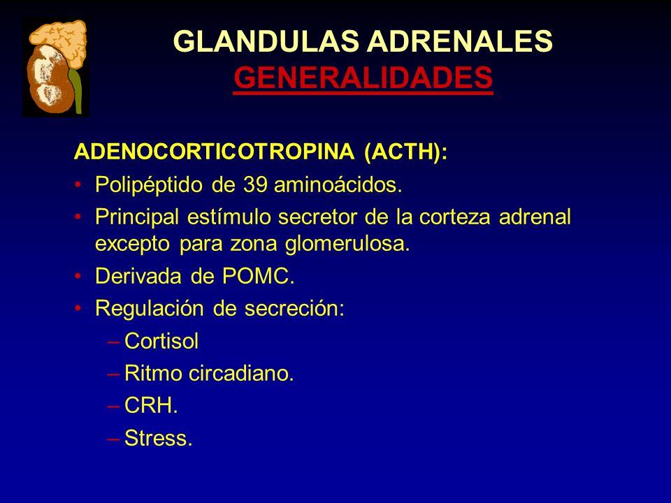 GLANDULAS ADRENALES GENERALIDADES ADENOCORTICOTROPINA (ACTH): Polipéptido de 39 aminoácidos.