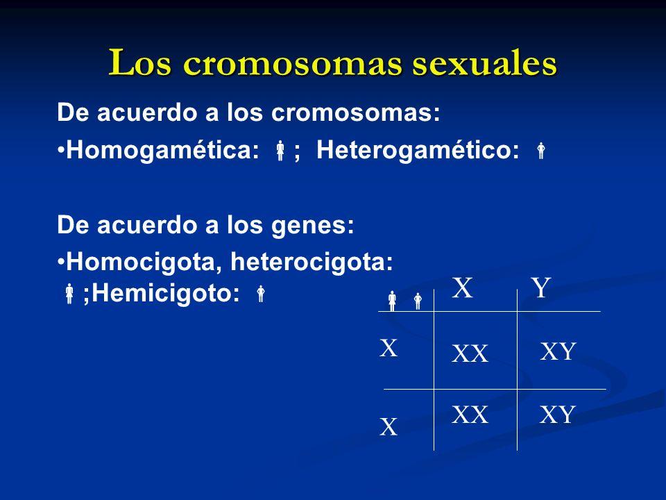 Los cromosomas sexuales XY XY X X XX De acuerdo a los cromosomas: Homogamética: ; Heterogamético: De acuerdo a los genes: Homocigota, heterocigota: ;H