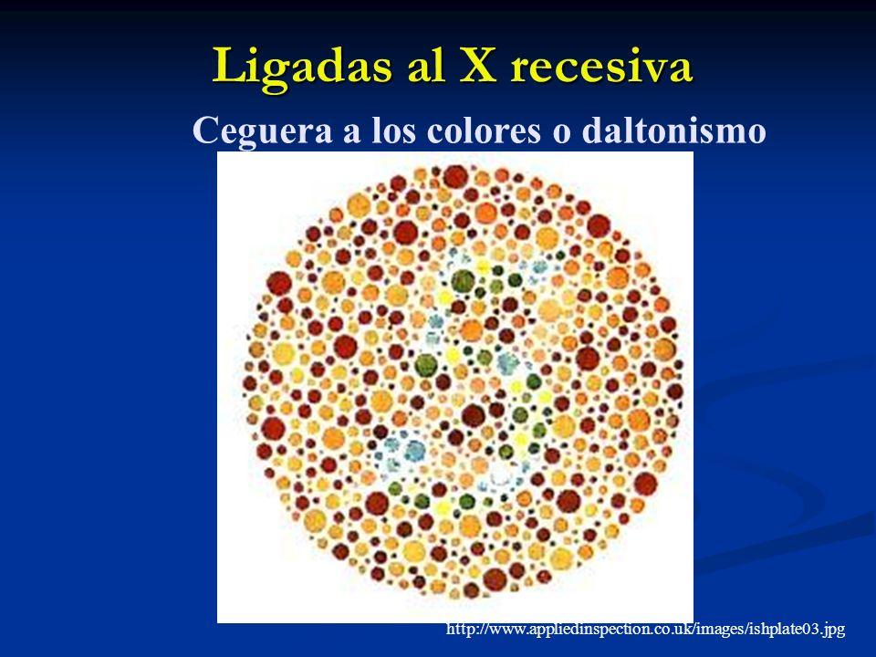 Ligadas al X recesiva http://www.appliedinspection.co.uk/images/ishplate03.jpg Ceguera a los colores o daltonismo