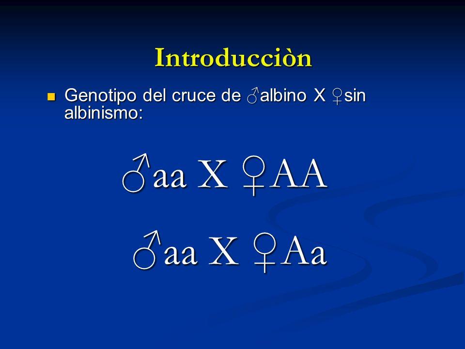 Introducciòn Genotipo del cruce de albino X sin albinismo: Genotipo del cruce de albino X sin albinismo: aa X AA aa X Aa