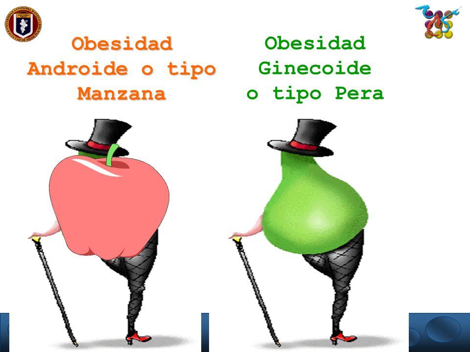 Obesidad Androide o tipo Manzana Obesidad Ginecoide o tipo Pera