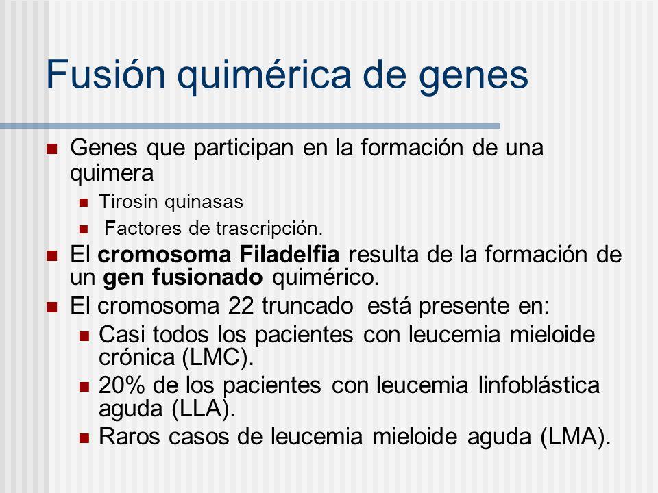 Fusión quimérica de genes Genes que participan en la formación de una quimera Tirosin quinasas Factores de trascripción. El cromosoma Filadelfia resul