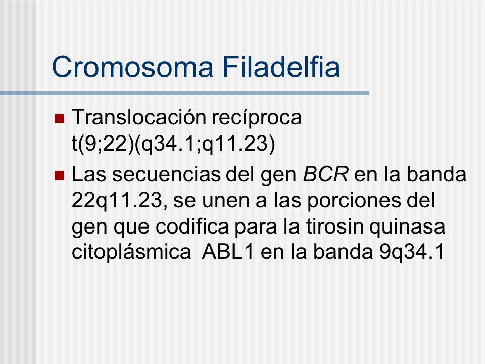 Cromosoma Filadelfia Translocación recíproca t(9;22)(q34.1;q11.23) Las secuencias del gen BCR en la banda 22q11.23, se unen a las porciones del gen qu