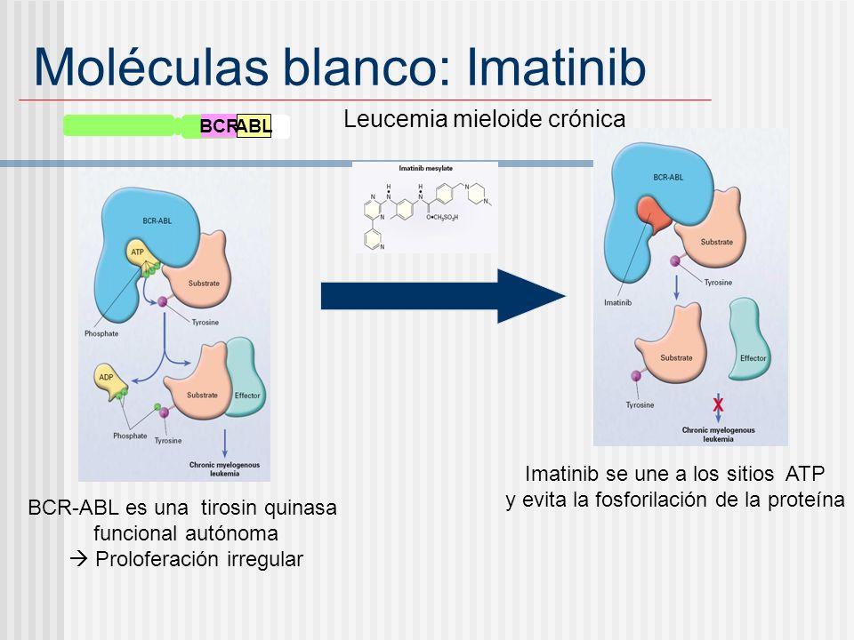Moléculas blanco: Imatinib BCR ABL Leucemia mieloide crónica BCR-ABL es una tirosin quinasa funcional autónoma Proloferación irregular Imatinib se une