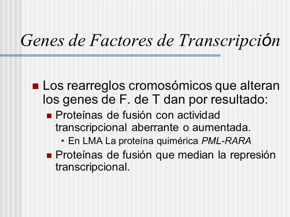 Genes de Factores de Transcripci ó n Los rearreglos cromosómicos que alteran los genes de F. de T dan por resultado: Proteínas de fusión con actividad