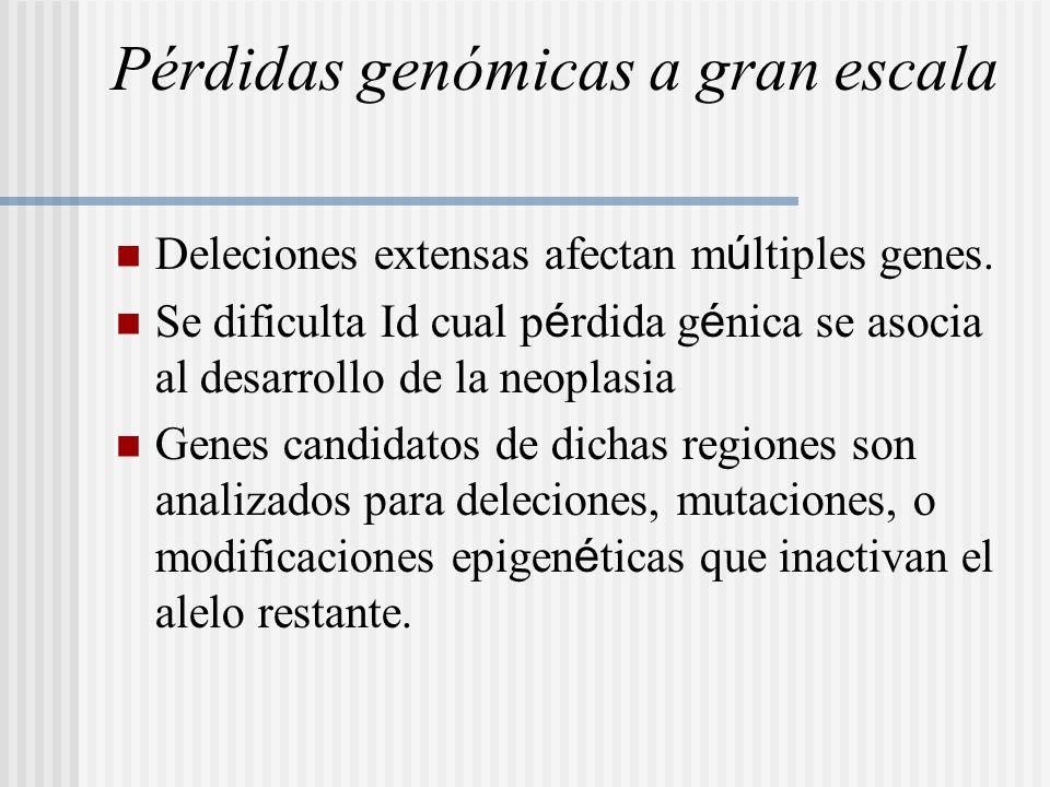 Pérdidas genómicas a gran escala Deleciones extensas afectan m ú ltiples genes. Se dificulta Id cual p é rdida g é nica se asocia al desarrollo de la