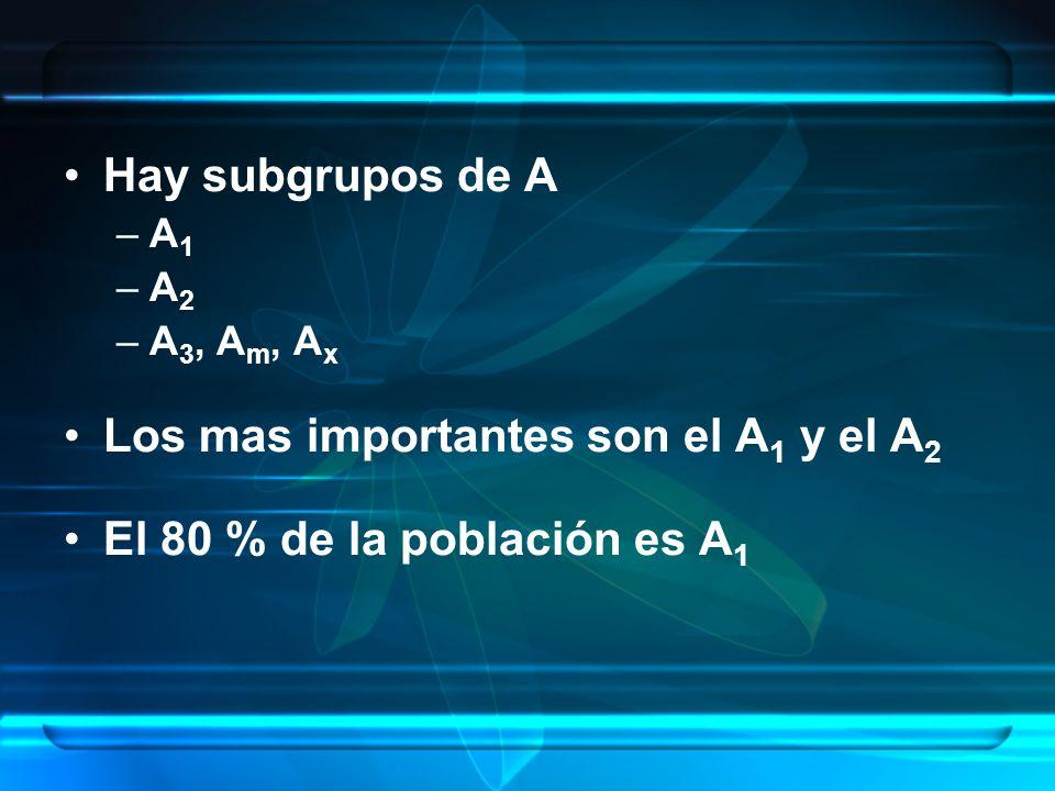 Hay subgrupos de A –A 1 –A 2 –A 3, A m, A x Los mas importantes son el A 1 y el A 2 El 80 % de la población es A 1
