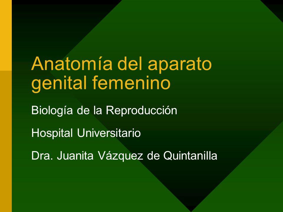 Anatomía del aparato genital femenino Biología de la Reproducción Hospital Universitario Dra. Juanita Vázquez de Quintanilla