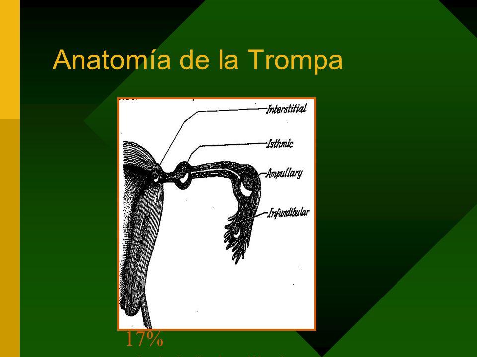Anatomía de la Trompa 95% Tubárico - 55% ampular - 20-25% itsmico - 17% Fimbria/infundibulo 2-4% Cornual 0.5% Ovárico 0.1% Cornual 0.03% Abdominal