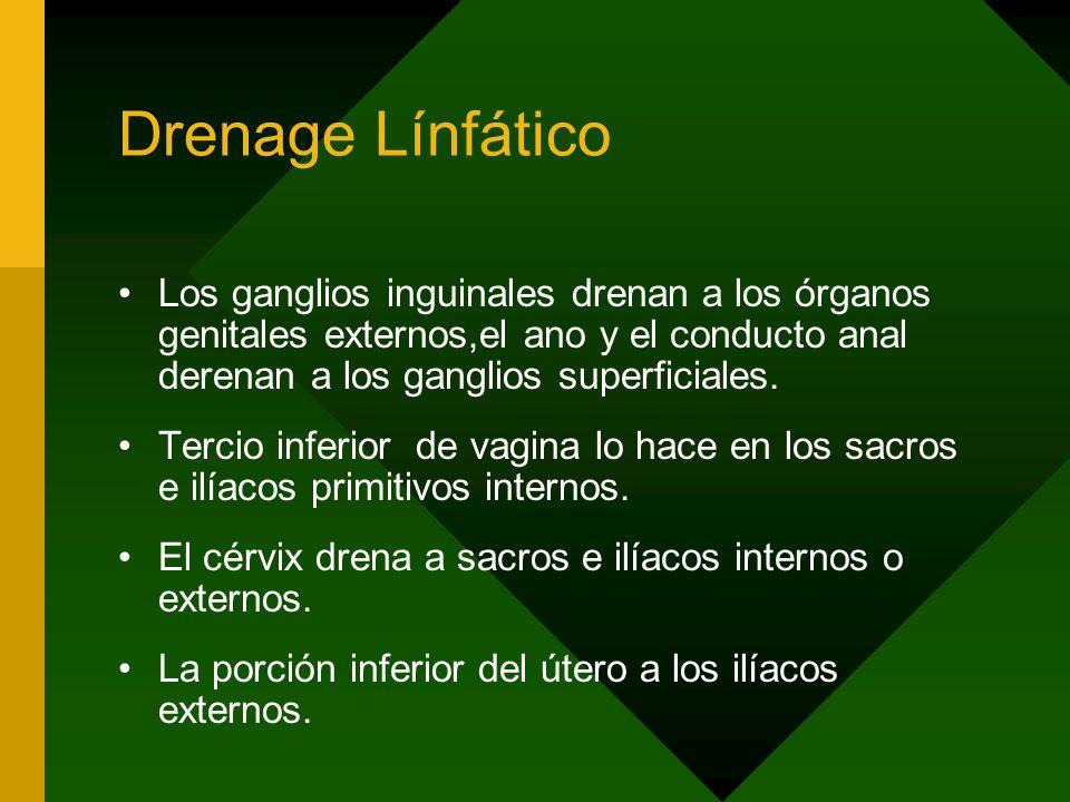 Drenage Línfático Los ganglios inguinales drenan a los órganos genitales externos,el ano y el conducto anal derenan a los ganglios superficiales. Terc