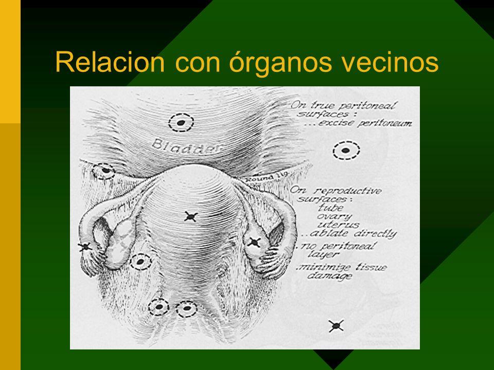 Relacion con órganos vecinos