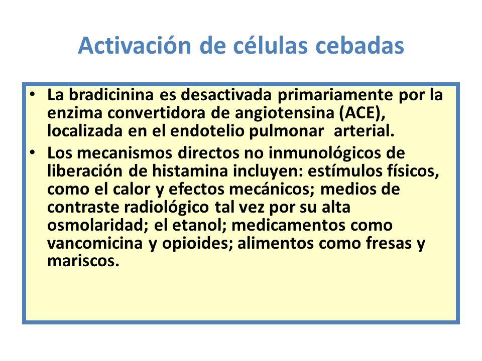 Activación de células cebadas La bradicinina es desactivada primariamente por la enzima convertidora de angiotensina (ACE), localizada en el endotelio