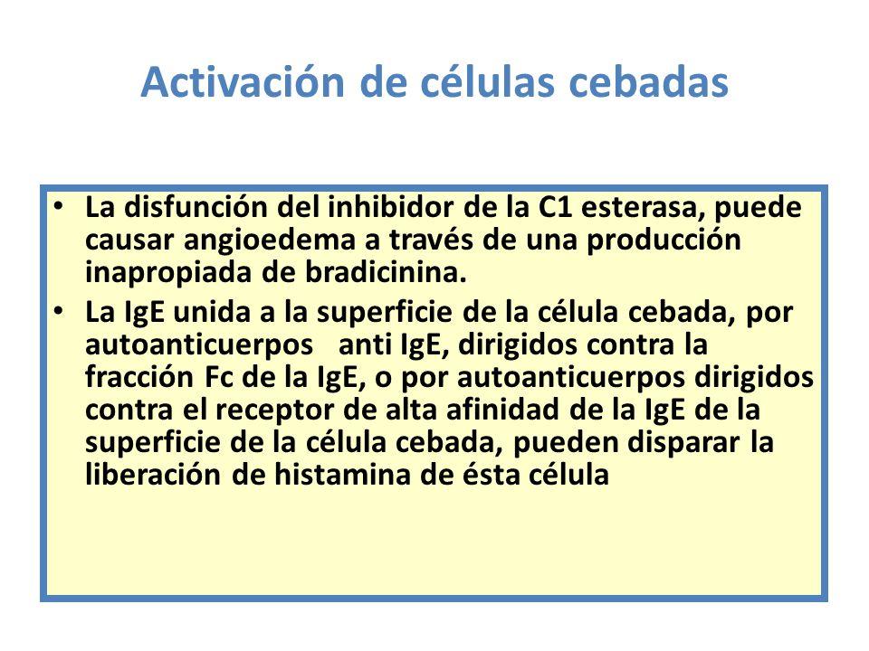 Activación de células cebadas La disfunción del inhibidor de la C1 esterasa, puede causar angioedema a través de una producción inapropiada de bradici