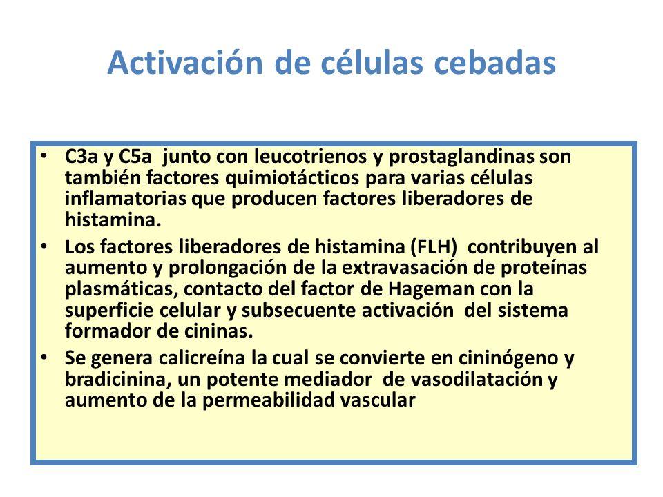 Activación de células cebadas C3a y C5a junto con leucotrienos y prostaglandinas son también factores quimiotácticos para varias células inflamatorias