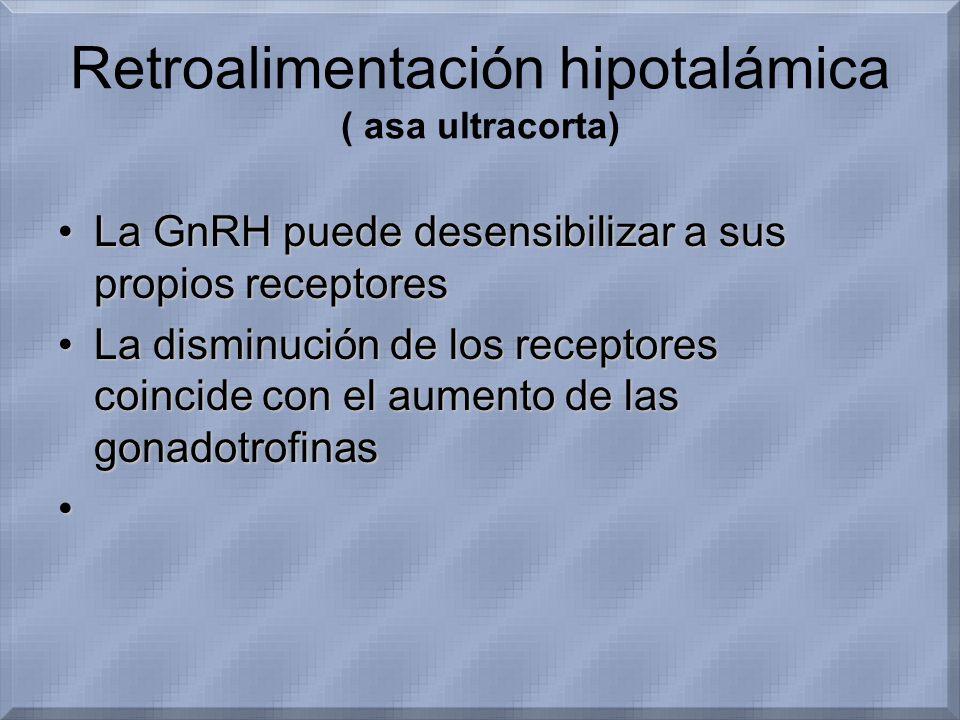 Retroalimentación hipotalámica ( asa ultracorta) La GnRH puede desensibilizar a sus propios receptoresLa GnRH puede desensibilizar a sus propios recep