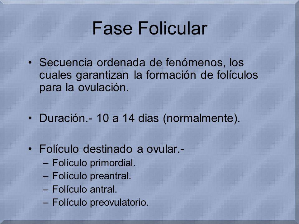 Fase Folicular Secuencia ordenada de fenómenos, los cuales garantizan la formación de folículos para la ovulación. Duración.- 10 a 14 dias (normalment