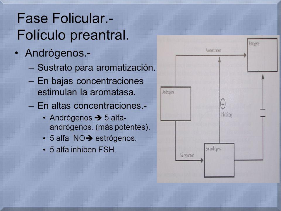 Fase Folicular.- Folículo preantral. Andrógenos.- –Sustrato para aromatización. –En bajas concentraciones estimulan la aromatasa. –En altas concentrac