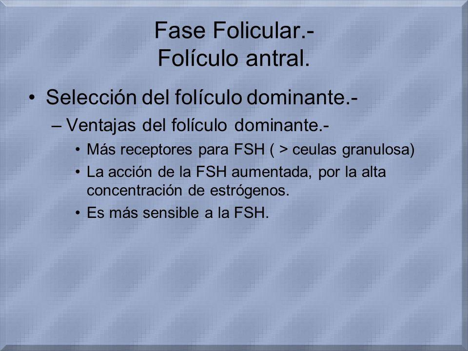 Fase Folicular.- Folículo antral. Selección del folículo dominante.- –Ventajas del folículo dominante.- Más receptores para FSH ( > ceulas granulosa)