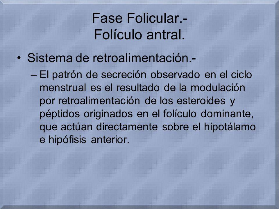 Fase Folicular.- Folículo antral. Sistema de retroalimentación.- –El patrón de secreción observado en el ciclo menstrual es el resultado de la modulac