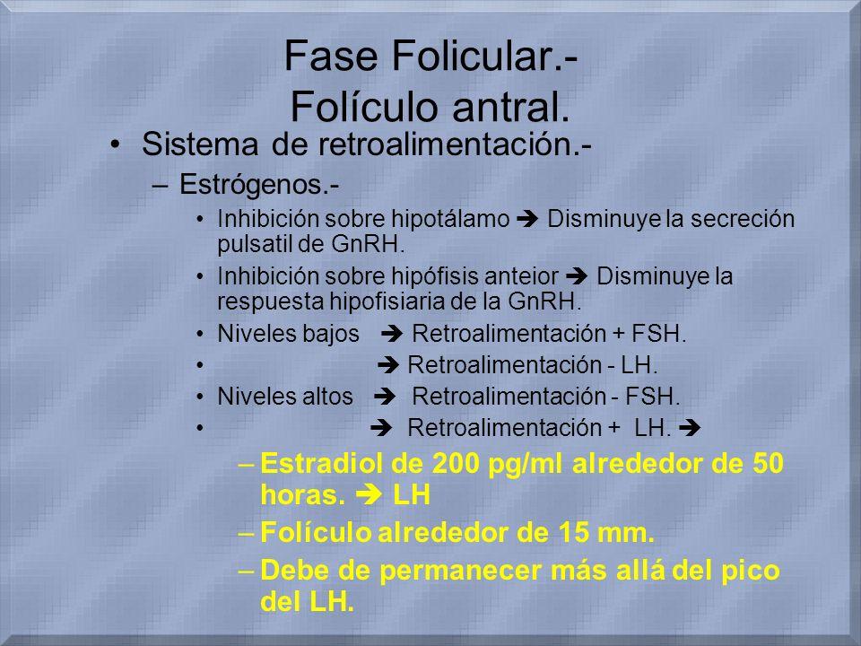 Fase Folicular.- Folículo antral. Sistema de retroalimentación.- –Estrógenos.- Inhibición sobre hipotálamo Disminuye la secreción pulsatil de GnRH. In
