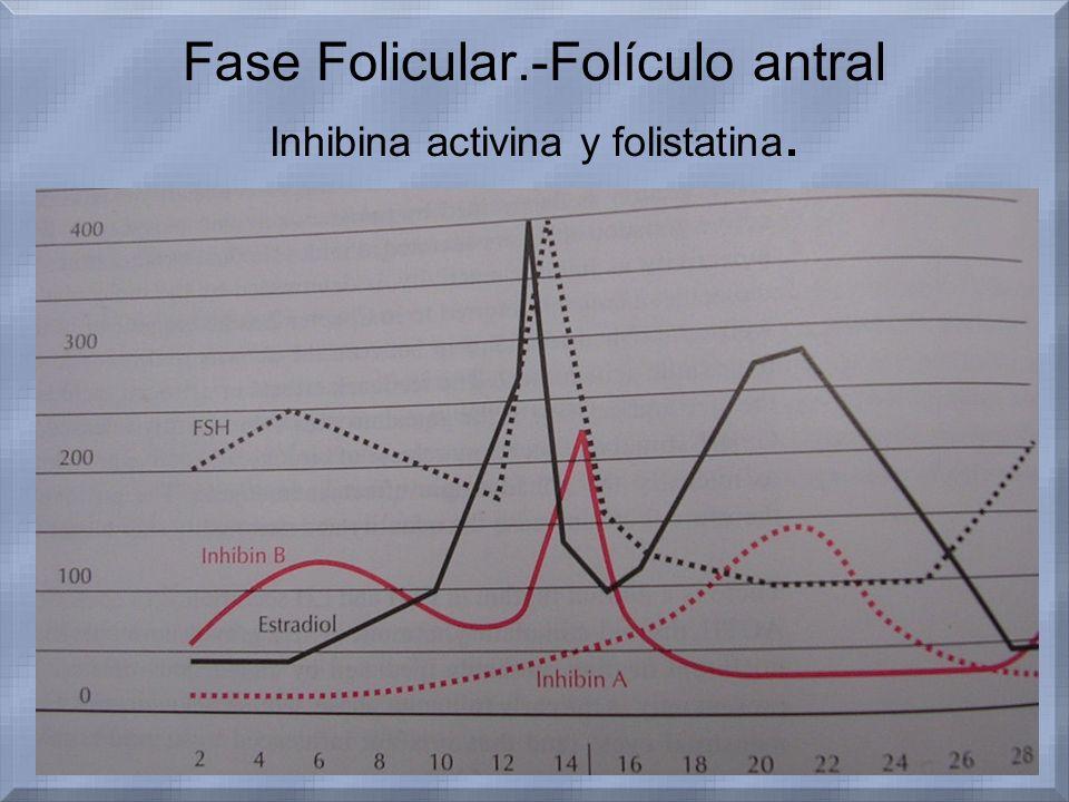 Fase Folicular.-Folículo antral Inhibina activina y folistatina. La activina.- –Actividad opuesta a inhibina. –Estimula la descarga de FSH desde la hi