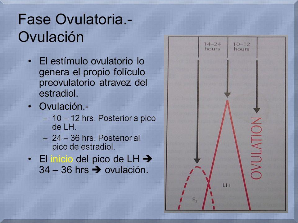 Fase Ovulatoria.- Ovulación El estímulo ovulatorio lo genera el propio folículo preovulatorio atravez del estradiol. Ovulación.- –10 – 12 hrs. Posteri