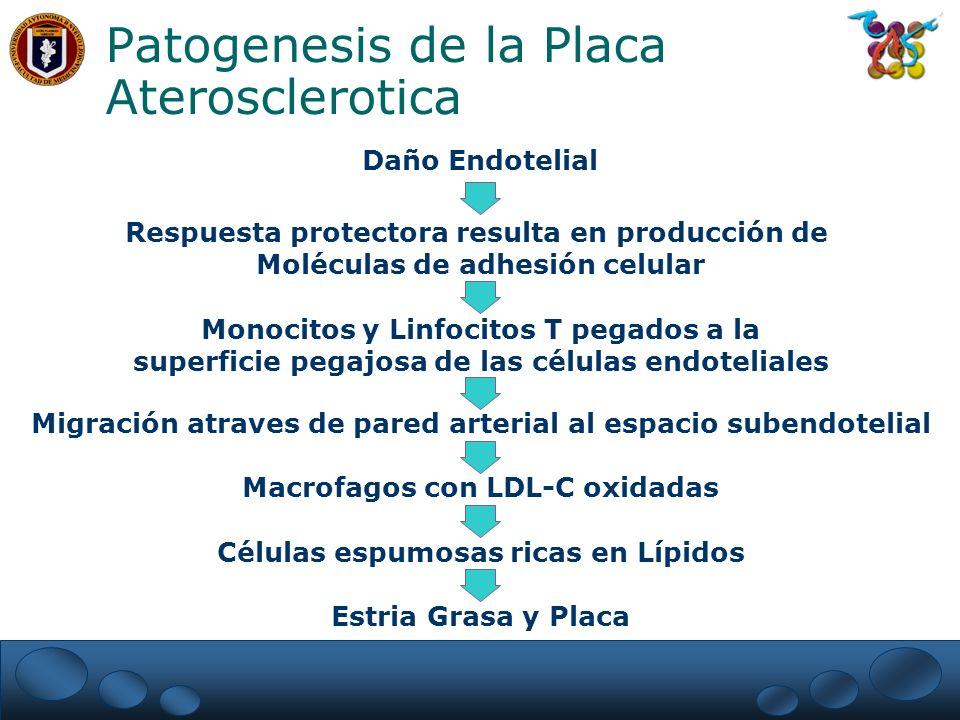 Patogenesis de la Placa Aterosclerotica Respuesta protectora resulta en producción de Moléculas de adhesión celular Monocitos y Linfocitos T pegados a