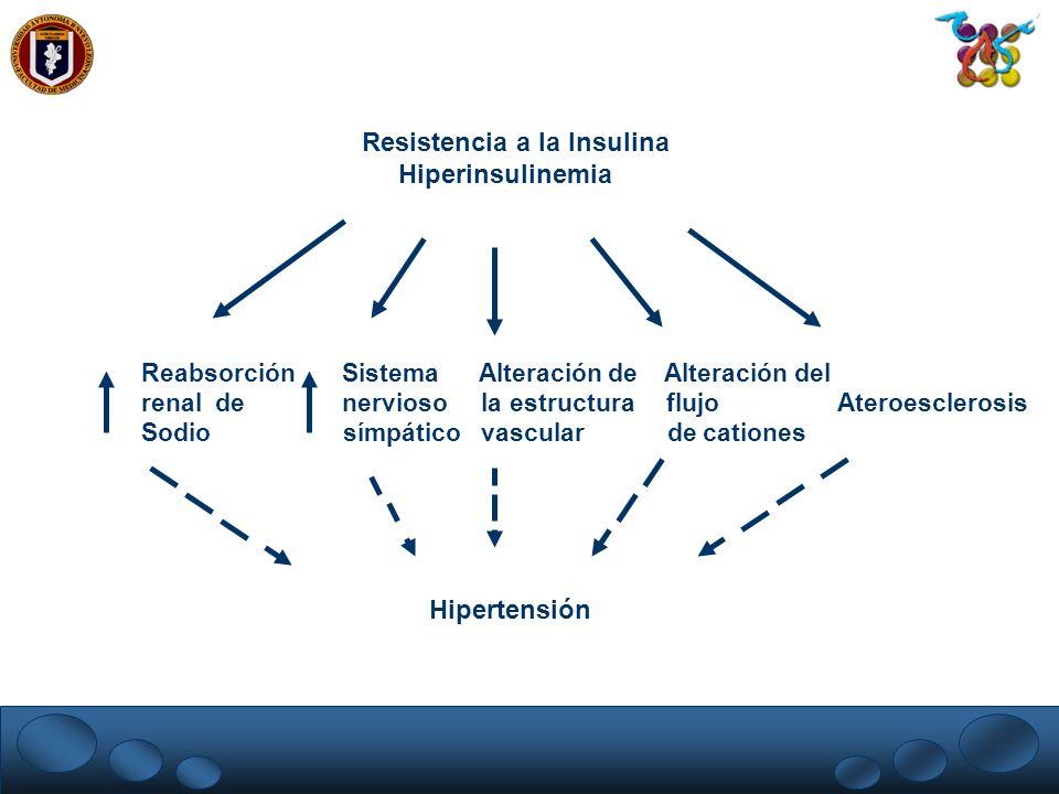 Reabsorción Sistema Alteración de Alteración del renal de nervioso la estructura flujo Ateroesclerosis Sodio símpático vascular de cationes Resistenci