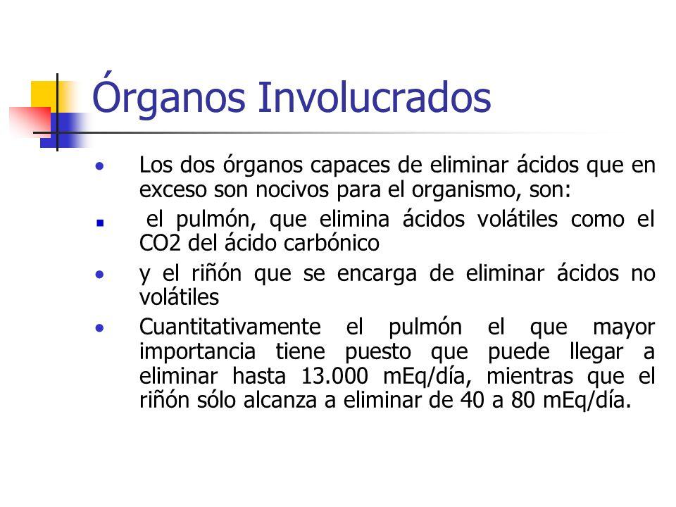 Órganos Involucrados Los dos órganos capaces de eliminar ácidos que en exceso son nocivos para el organismo, son: el pulmón, que elimina ácidos voláti