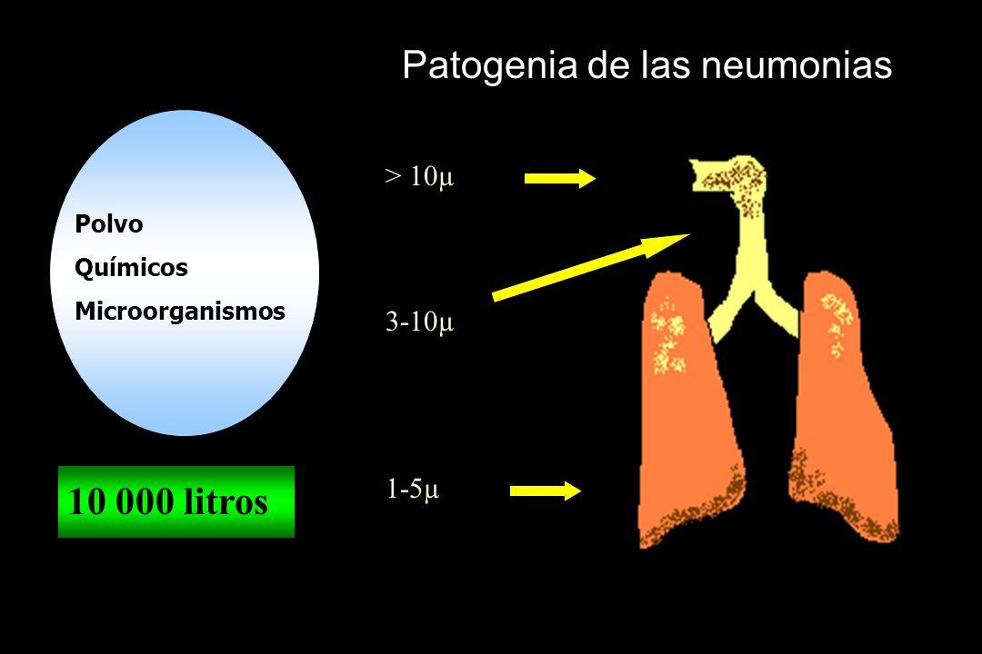 Patogenia de las neumonias Polvo Químicos Microorganismos 10 000 litros > 10µ 3-10µ 1-5µ