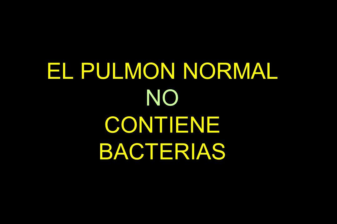 EL PULMON NORMAL NO CONTIENE BACTERIAS