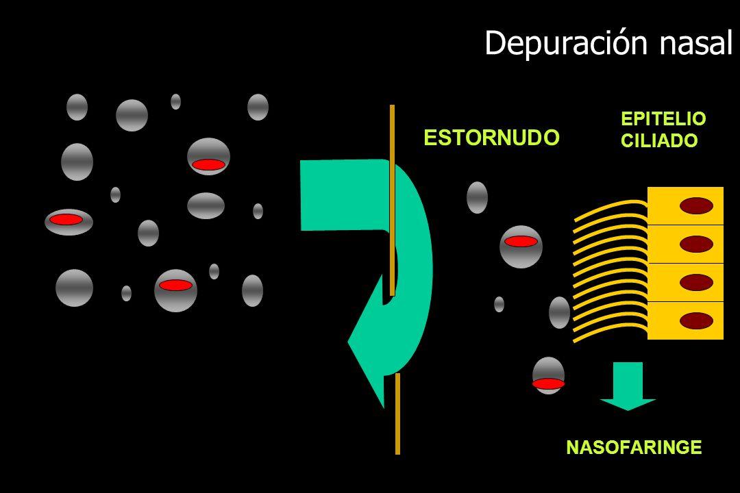 Depuración nasal ESTORNUDO NASOFARINGE EPITELIO CILIADO