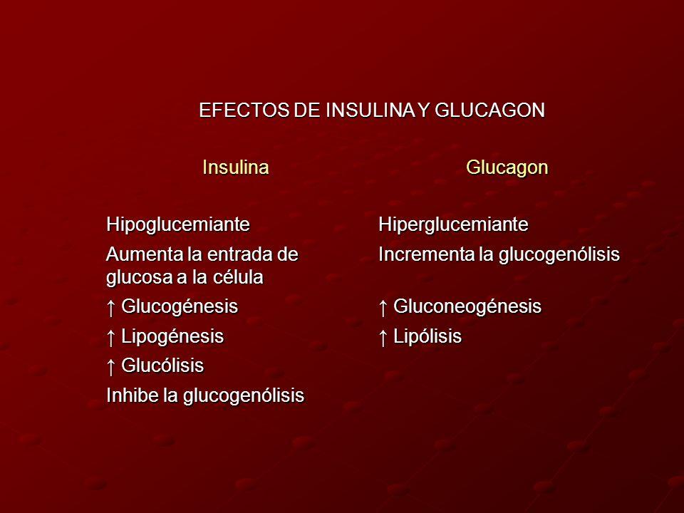 EFECTOS DE INSULINA Y GLUCAGON InsulinaGlucagon HipoglucemianteHiperglucemiante Aumenta la entrada de glucosa a la célula Incrementa la glucogenólisis