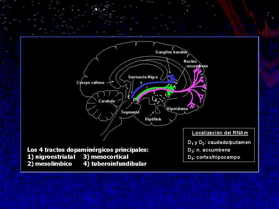 Funciones dopaminérgicas Sistema extrapiramidal Inicio y mantenimiento de conductas con objetivo y defensa Percepción de estímulos relevantes y no relevantes Regulación del afecto