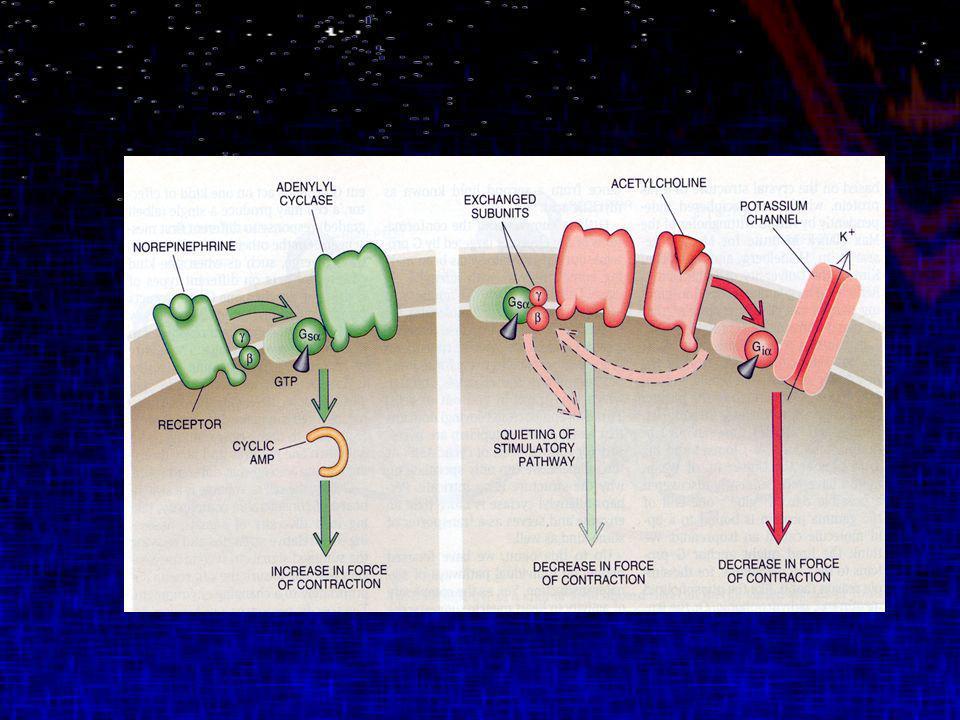 Trastorno Bipolar Litio y Valproato Producen alteraciones complejas en la unión basal y activada del ADN a la proteína activadora 1 (AP1).