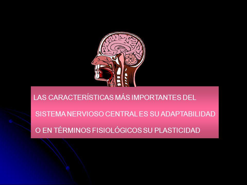 LAS CARACTERÍSTICAS MÁS IMPORTANTES DEL SISTEMA NERVIOSO CENTRAL ES SU ADAPTABILIDAD O EN TÉRMINOS FISIOLÓGICOS SU PLASTICIDAD