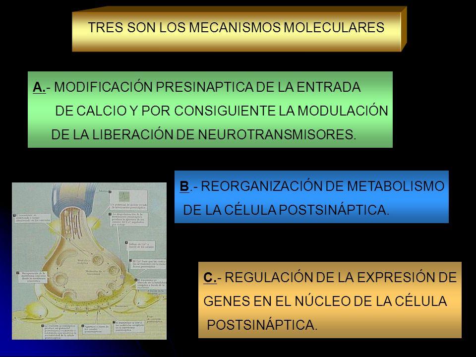 A.- MODIFICACIÓN PRESINAPTICA DE LA ENTRADA DE CALCIO Y POR CONSIGUIENTE LA MODULACIÓN DE LA LIBERACIÓN DE NEUROTRANSMISORES. TRES SON LOS MECANISMOS