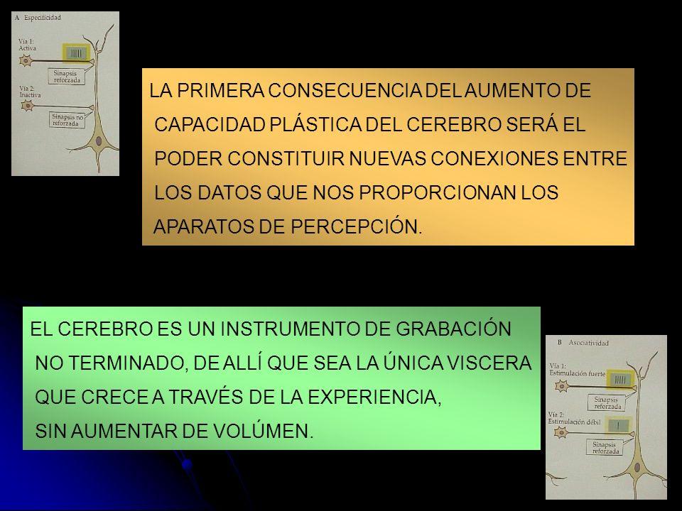LA PRIMERA CONSECUENCIA DEL AUMENTO DE CAPACIDAD PLÁSTICA DEL CEREBRO SERÁ EL PODER CONSTITUIR NUEVAS CONEXIONES ENTRE LOS DATOS QUE NOS PROPORCIONAN