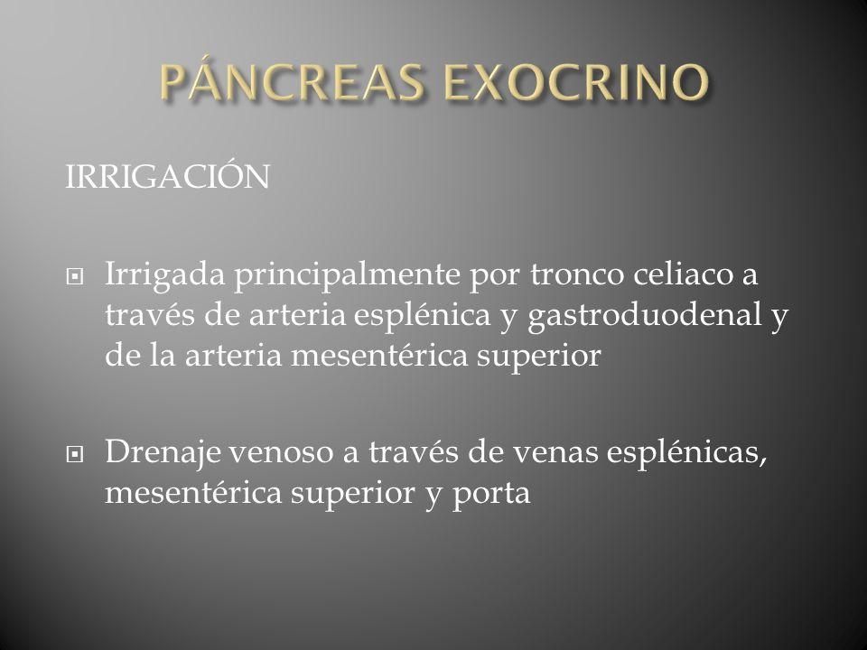 Adenocarcinoma de páncreas 5ta causa de muerte por cáncer en EU Más frecuente en hombres 80% ocurre alrededor de los 50-60 años Menos del 2% afecta a menores de 40 años