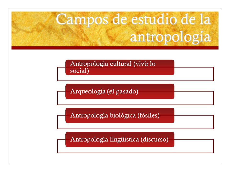 Campos de estudio de la antropología Antropología cultural (vivir lo social) Arqueología (el pasado)Antropología biológica (fósiles)Antropología lingü
