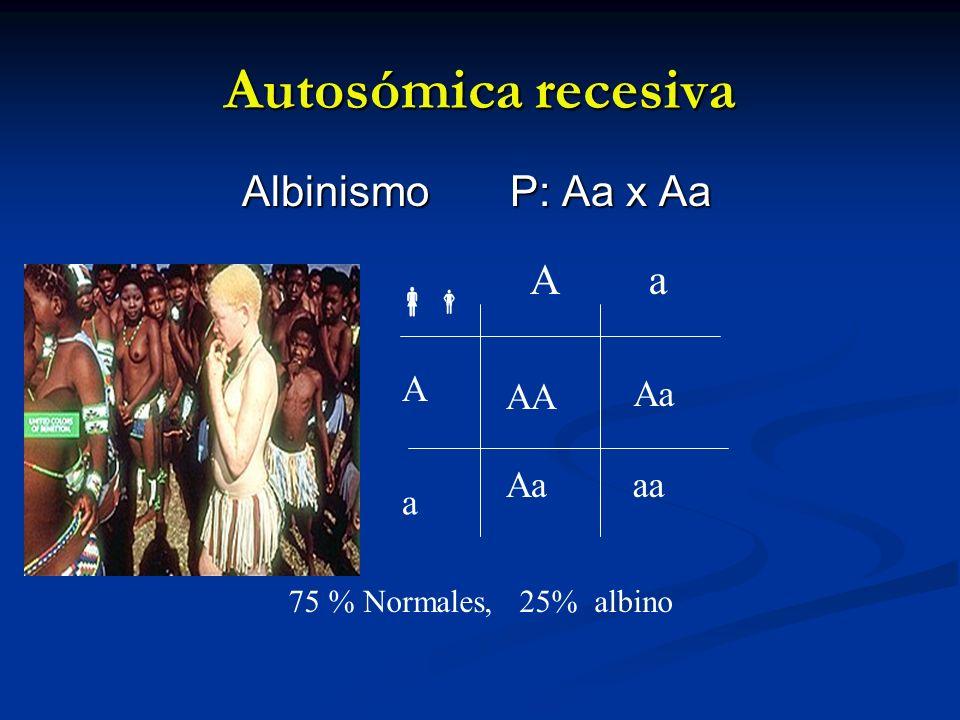 Autosómica recesiva Albinismo P: Aa x Aa Aa Aa A a aa AA Aa 75 % Normales, 25% albino
