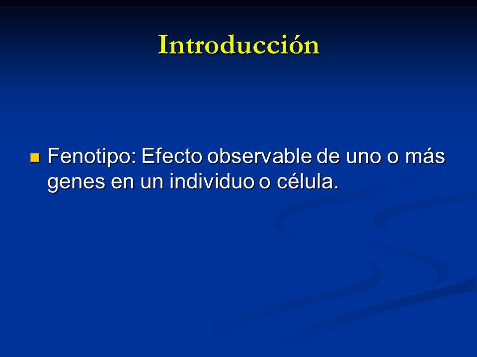 Introducción Fenotipo: Efecto observable de uno o más genes en un individuo o célula. Fenotipo: Efecto observable de uno o más genes en un individuo o
